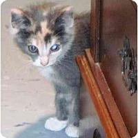 Adopt A Pet :: Pixie - Warren, OH