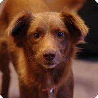 Adopt A Pet :: Ginger - Franklin, VA