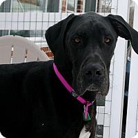 Adopt A Pet :: Maizey - Phoenixville, PA