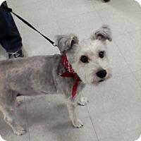 Adopt A Pet :: Maggie - Rancho Cordova, CA