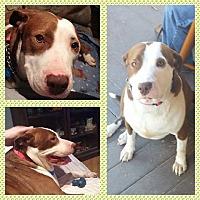 Adopt A Pet :: KJ - oxford, NJ