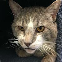 Adopt A Pet :: Buster - Novato, CA