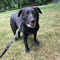 Adopt A Pet :: Bo - Charlotte, NC