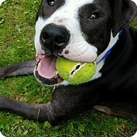 Adopt A Pet :: ZAC - Pittsburgh, PA