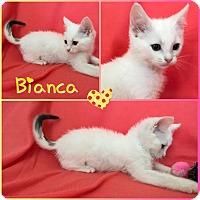 Adopt A Pet :: Bianca - Jeffersonville, IN