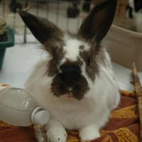 Other/Unknown/Other/Unknown Mix for adoption in Bedford, New Hampshire - Kashi