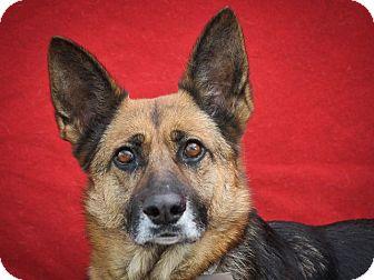 German Shepherd Dog Dog for adoption in Mill Creek, Washington - Ingrid