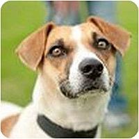 Adopt A Pet :: Paris in Houma - Houston, TX