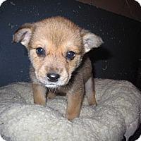 Adopt A Pet :: Autumn - Westbank, BC
