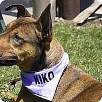 Adopt A Pet :: Holly - Rigaud, QC