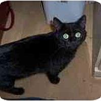 Adopt A Pet :: Pepper - Arlington, VA