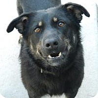 Adopt A Pet :: Wahampi - Cheyenne, WY