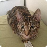 Adopt A Pet :: Alexis - Alexandria, VA
