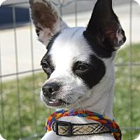 Adopt A Pet :: Liberace - Meridian, ID
