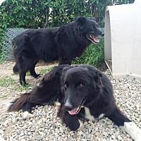 Adopt A Pet :: Ike&Spike (Cross Post) - Lynnwood, WA