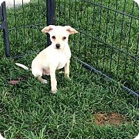 Adopt A Pet :: Belize - Meridian, ID