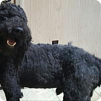 Adopt A Pet :: Benji - ADOPTED!! - Antioch, IL