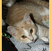 Adopt A Pet :: JJ - New Richmond,, WI