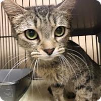 Adopt A Pet :: Aurora - Apache Junction, AZ