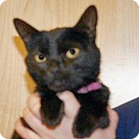 Adopt A Pet :: 351785 - Wildomar, CA