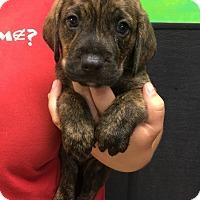 Adopt A Pet :: Luigi - South Dennis, MA