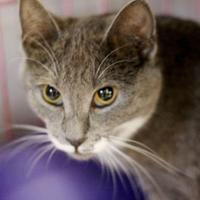 Adopt A Pet :: Bugs - Huntingdon, PA