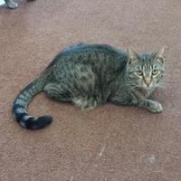 Adopt A Pet :: Trapp - Erie, PA