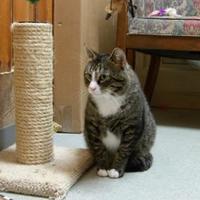 Adopt A Pet :: Rocky - BATH, NY