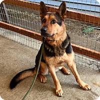 Adopt A Pet :: Deacon - Portland, OR