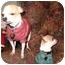 Photo 3 - Chihuahua Dog for adoption in San Diego, California - Lucy and Molly