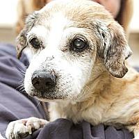 Adopt A Pet :: Gilligan - Acton, CA