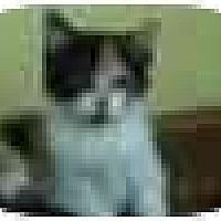 Adopt A Pet :: Alexa - Jenkintown, PA