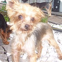 Adopt A Pet :: Annie - CAPE CORAL, FL