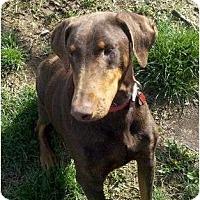 Adopt A Pet :: Lyla--adopted!! - New Richmond, OH