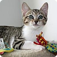 Adopt A Pet :: Colby - Vero Beach, FL