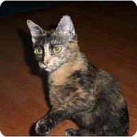 Adopt A Pet :: Audrey - Warminster, PA