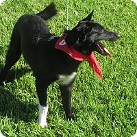 Adopt A Pet :: Darla - VIDEO - Monrovia, CA
