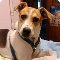 Adopt A Pet :: Noah - Saint Albans, WV