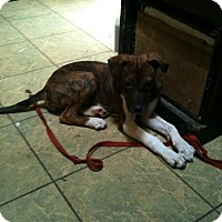 Adopt A Pet :: Lucy - Antioch, IL