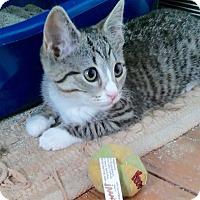 Adopt A Pet :: Jillian - Colmar, PA