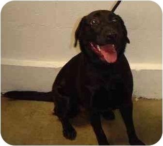 Labrador Retriever Mix Dog for adoption in Cumming, Georgia - Missy