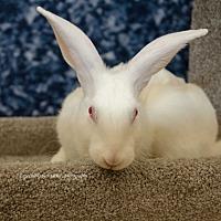 Adopt A Pet :: Jubilee - Marlton, NJ