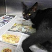 Adopt A Pet :: NOCHE - Los Angeles, CA