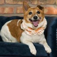 Adopt A Pet :: Coco - Elkhorn, WI