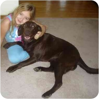 Labrador Retriever Mix Dog for adoption in Evergreen, Colorado - Cookie