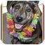 Photo 1 - German Shepherd Dog/Hound (Unknown Type) Mix Puppy for adoption in Sacramento, California - Klyde best pup