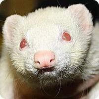 Adopt A Pet :: Tara - Pinesville, OR