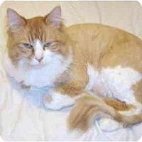 Adopt A Pet :: Oscar - Catasauqua, PA