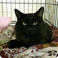 Adopt A Pet :: Pipit - Byron Center, MI