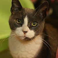 Adopt A Pet :: Toni - Canoga Park, CA